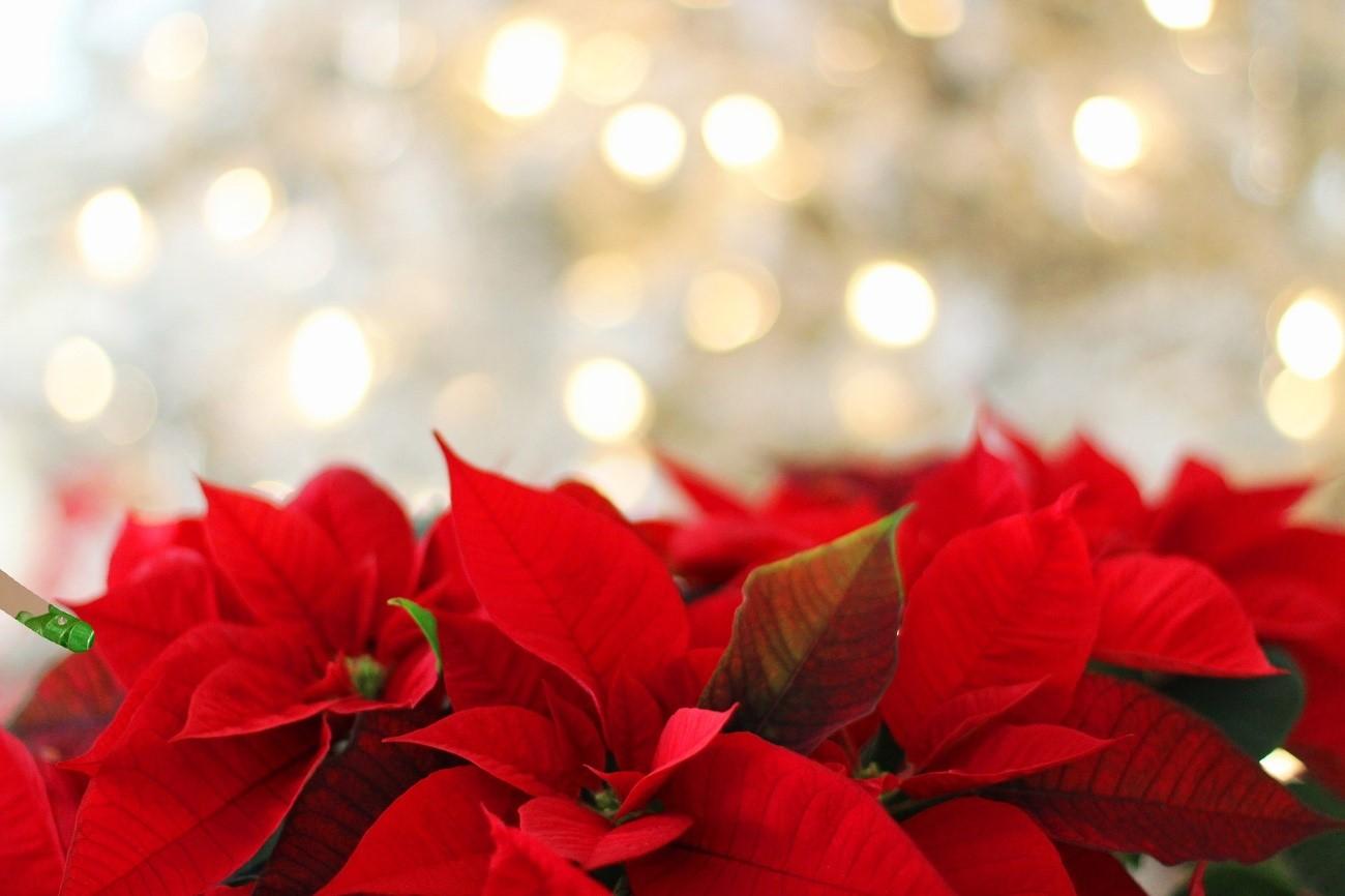 Weihnachten Termine.Wichtige Termine Für Ein Perfektes Weihnachten Auf Teneriffa